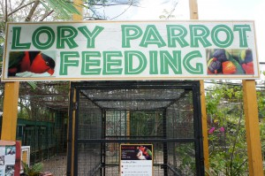 Lory Parrot Feeding at Ardastra Gardens & Zoo